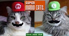 Super Mario Cats