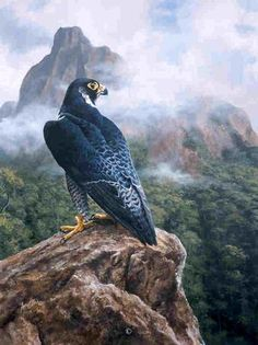 """""""Peregrine Falcon in Madagascar"""" by Andrew Ellis16""""w x 21""""hAcrylic on Board -Previous Works by Andrew Ellis"""