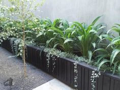 Lush Arthoropodium cirratum and Dichondra 'Silver Falls' bring life to this inner city courtyard. Side Garden, Garden Beds, Garden Walls, Balcony Garden, Back Gardens, Outdoor Gardens, Hanging Plants Outdoor, Plants Indoor, Landscape Design