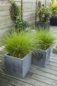 Grasses in square tubs - Garten - Design RatBalcony Plants tan Furniture Balcony Plants, Patio Plants, Balcony Garden, Outdoor Plants, Garden Planters, Outdoor Gardens, Backyard Garden Design, Small Garden Design, Backyard Landscaping