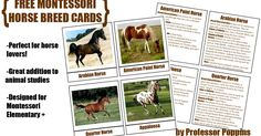 Miss Poppins: FREE Montessori Horse Breed Cards This will go great with our horse lapbook! Free Horses, Wild Horses, Montessori Elementary, Montessori Preschool, Preschool Science, American Paint Horse, Farm Unit, Horse Cards, Animal Science