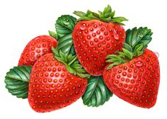 From the beginning of my art career I specialized in still life imagery. Soon, I was illustrating a lot of fruit. Therefore, I not only considered my niche to be one of being a food illustrator, so… Fruit Illustration, Food Illustrations, Botanical Illustration, Strawberry Garden, Strawberry Fruit, Fruits Drawing, Plant Drawing, Fruit And Veg, Fruits And Vegetables