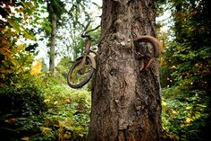 Vintage Bicycle, another view.  Bike in Tree by Todd Bates, via Flickr