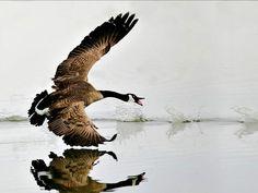 Fotos de Canadá - National Geographic