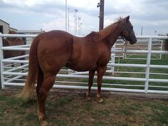 Elvis - all around horse  www.Cowboy4Sale.com