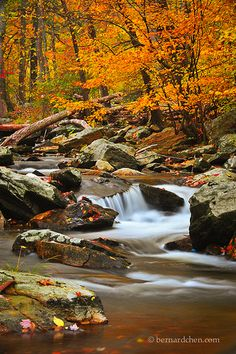 Cunningham Falls State Park, Maryland - a pretty (and close) place to spend a fall afternoon.