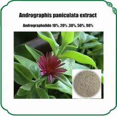 Andrographis paniculata extract  Andrographolide has been shown to be effective against certain cancers and is a powerful purgative. When in bloom, Andrographis exhibits small white flowers.