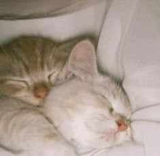 Cute Little Animals, Cute Funny Animals, Cute Cats, Kittens Cutest, Cats And Kittens, Gato Gif, Cat Aesthetic, Pretty Cats, Cat Memes