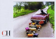 The Terrier and Lobster: Carolina Herrera CH Ads