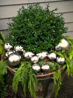 boxwood with fern clippings and silver balls.