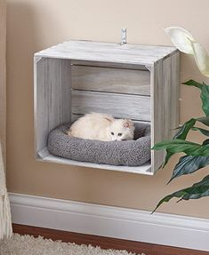Wall-Mounted Cat Crate BedsYou can find Pet beds and more on our Wall-Mounted Cat Crate Beds Animal Room, Animal House, Cat Crate, Crate Bed, Cat House Diy, Cat Shelves, Cat Room, Pet Furniture, Farmhouse Cat Furniture