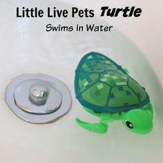 The Little Live Pets Turtle swims in water and walks on land!