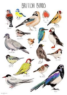 British Birds Poster - Illustrations by Rebecca Kiff