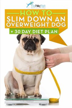 How To Slim Down an Overweight Dog + 30-Day Diet Plan. Staying fit and healthy and maintaining an ideal weight is just as important for dogs as it is for people. However, the fact is that dog obesity is one of the most rapidly growing health problems faced by canines in today's society. This article discusses how excess weight will affect your dog and offers suggestions on how to slim down an overweight dog. #dogs #overweight #fat #fatdog #diabetes