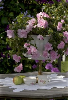 Grandmothers cream jug under the old azalea