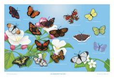 Illustrated by Ingebjørg Faugstad Mæland. Turtle, Butterfly, Education, Illustration, Poster, Animals, Turtles, Animales, Animaux