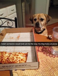 (viatastefullyoffensive:betsyricelong) This is like Literally my dog; he lives pizza abd looks almost exactly like that dog lol
