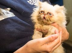 We are in North Carolina after yet another puppy mill rescue. We found one cat sitting in a dirty plastic bin in a filthy room...  stop puppy & kitty mills!!