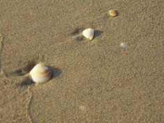 Sea shells on the beach Free Stock Photos, Free Photos, Marina Beach, Caribbean Vacations, Deep Sea Fishing, Sea And Ocean, Amazing Adventures, Travel And Leisure, Beach Photography