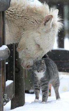pony and cat