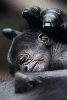 So precious ✨