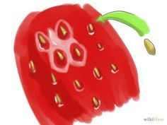 Grow Strawberries from the Seed Step 1.jpg