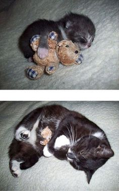 Then And Now, With A Teddy Bear
