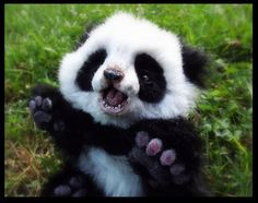 Hand Made Poseable Baby Panda!