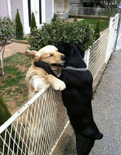Freundschaftliche Umarmung unter Hunden | Webfail - Fail Bilder und Fail Videos
