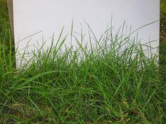 3D Maya. Дневник начинающей: Несколько советов по съёмке травы.