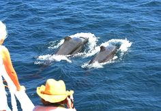 Dolphin-spotting in the Maldives