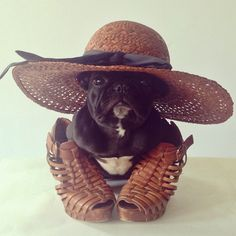 The 20 chic pets you have to follow on Instagram: