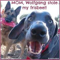 Friday Funny: Dog park shenanigans. Woof!