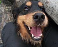 Eu você e o cachorro é o maior colaborador do Aquipode :)