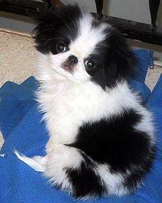 Chin puppy love.