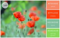 Canva's Guide to Color Combinations