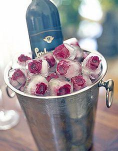 Rosas no gelo