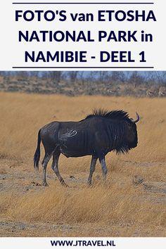 Een must do als je in Namibië rondreist, is een (meerdaags) bezoek aan Etosha National Park. Etosha National Park is het bekendste nationale park om wildlife te spotten in Namibië. Ik heb hier onder begeleiding van een ranger in een 4x4 een gamedrive gemaakt en veel wild gespot. Her zie deel 1 van mijn foto's van deze gamedrive door het Etosha National Park? #etoshanationalpark #wildlife #gamedrive #namibie #jtravel #jtravelblog #fotos