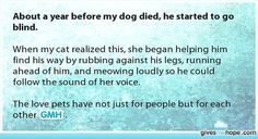 About a year before my dog died, he started to go blind. When my cat realized th. Sad Love Stories, Touching Stories, Sweet Stories, Cute Stories, Beautiful Stories, Happy Stories, My Dog Died, Love Gives Me Hope, Human Kindness