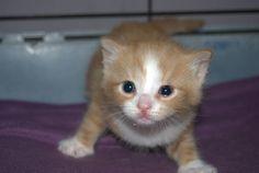 kitten kirsten vind de flits heel irritant