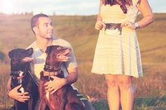 Pregnancy announcement reveal with dogs ---   http://tipsalud.com   -----