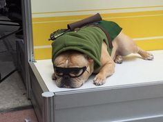 San Diego Comic-Con 2015 Cosplay - Doggy Arrow