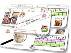 Dossier, exercices et observations sur le hamster!