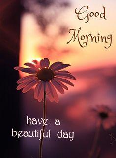 Good Morning Texts, Good Morning Love, Good Morning Flowers, Morning Wish, Good Morning Beautiful Pictures, Have A Beautiful Day, Good Morning Images, Good Morning Massage, Good Day Wishes