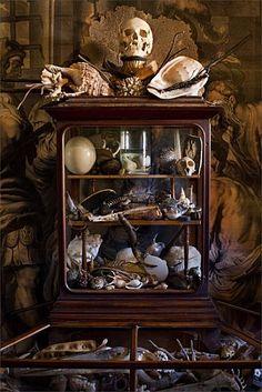Skulls:  #Skull and other curiosities. Malplaquet-House 32.