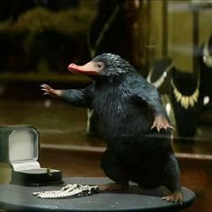 Niffler <<< I could NOT stop thinking about how cute this little guy was throughout the entire movie!
