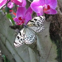 Gardening for Butterflies, Birds and Bees (All Things Plants)