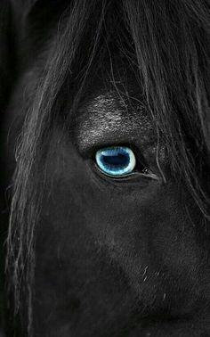 katharina die große sex mit pferden