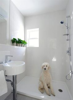 Bathing Your Dog - Full shower in the mudroom - now if we could somehow add a…