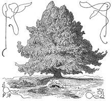 In Norse mythology, Yggdrasil ( /ˈɪɡdrəsɪl/; from Old Norse Yggdrasill, pronounced [ˈyɡːˌdrasilː]) is an immense tree that is central in Norse cosmology, on which the nine worlds existed.
